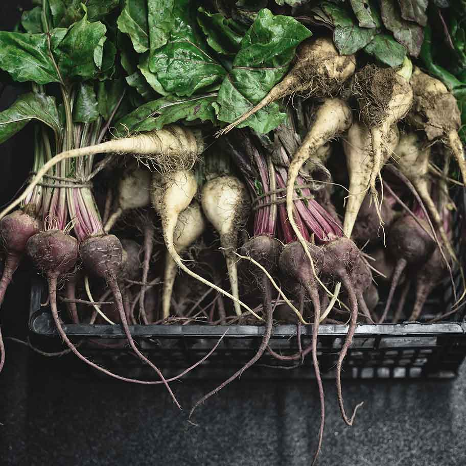 vegetables roots